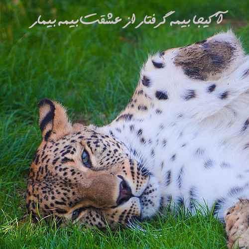 Hossein Rezaei A Kija دانلود آهنگ آ کیجا بیمه گرفتار از عشقت بیمه بیمار
